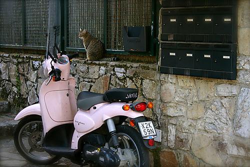 Cat n' motorbike