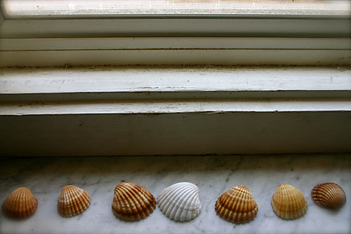 Shells on a window