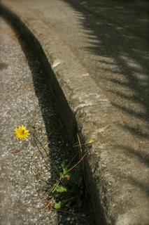 Within the sidewalk