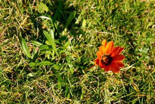 A small orange flower