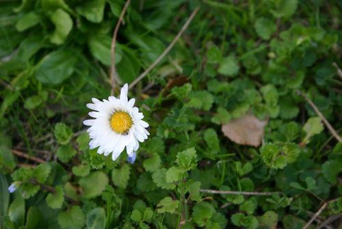 A little daisy