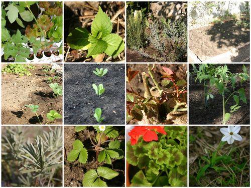 Spring garden 2009