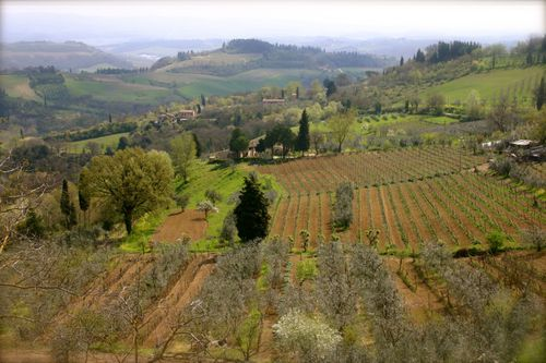 Tuscan spring 09