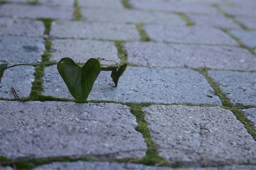 Leafhearts