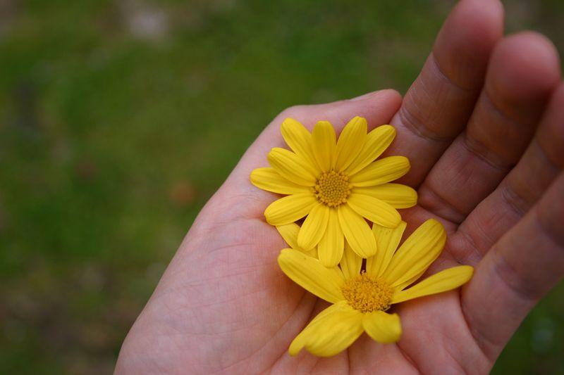 Mama_flower