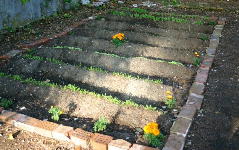 Garden_grows_2